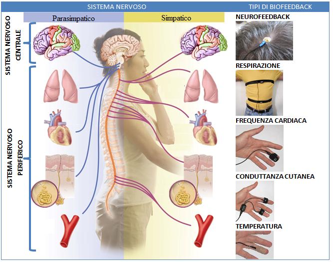 Neuroscienze Sport e biofeedback